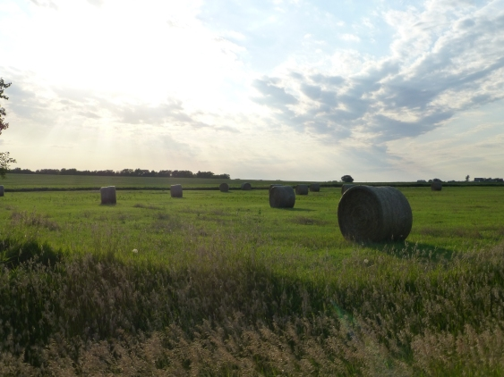 Hay Bales near Willow Springs, Douglas County, Kansas.