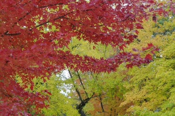 Autumn in my own yard.