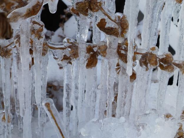 Front Yard Ice III