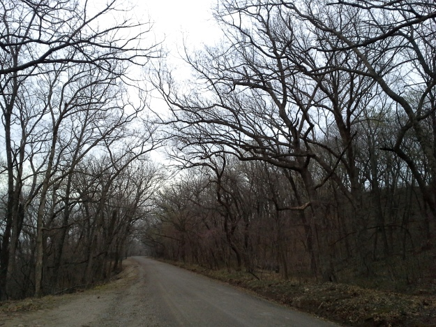 "A canopy of trees close in over ""Scenic River Drive."""