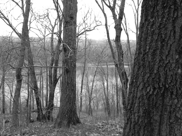 Trees grow along the steep bank to the Kansas river.